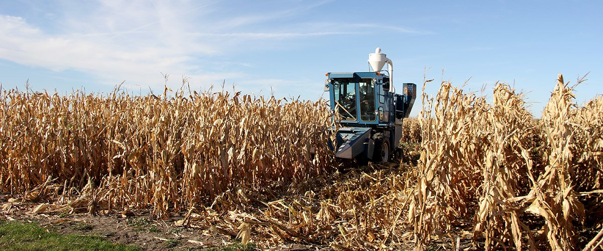 2-row plot combine harvesting corn