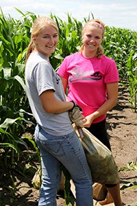 Student workers standing at the edge of a corn field